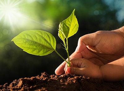 Seedling emerging from soil